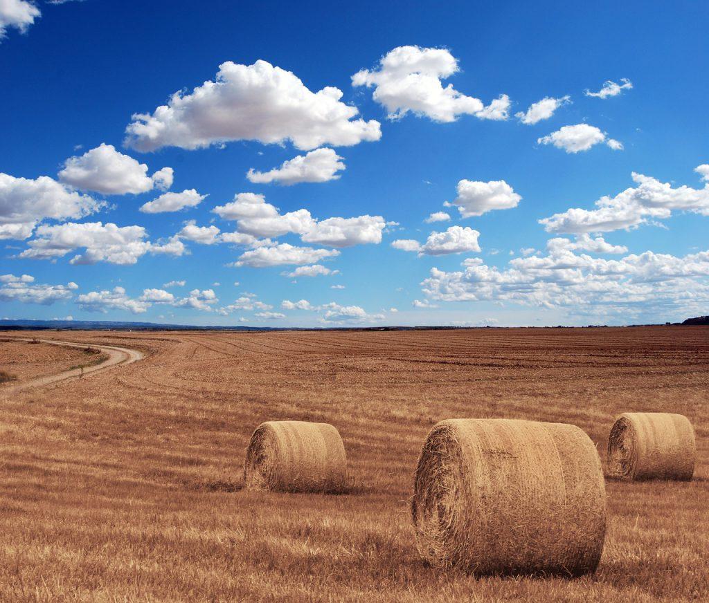 hay bales, round, farm